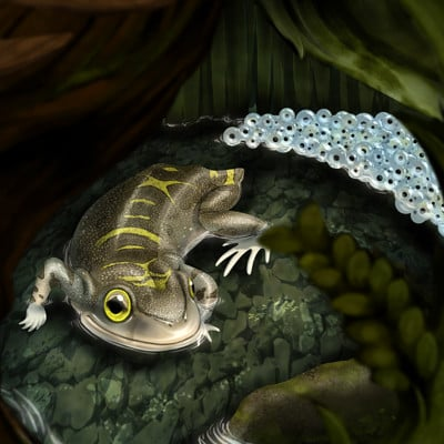 Javier valdez triadobatrachus in life