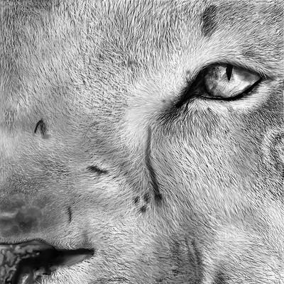 Liam wedge lioneye1