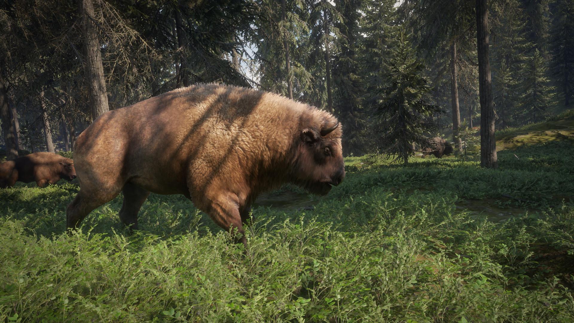 Yarrid henrard european bison tank