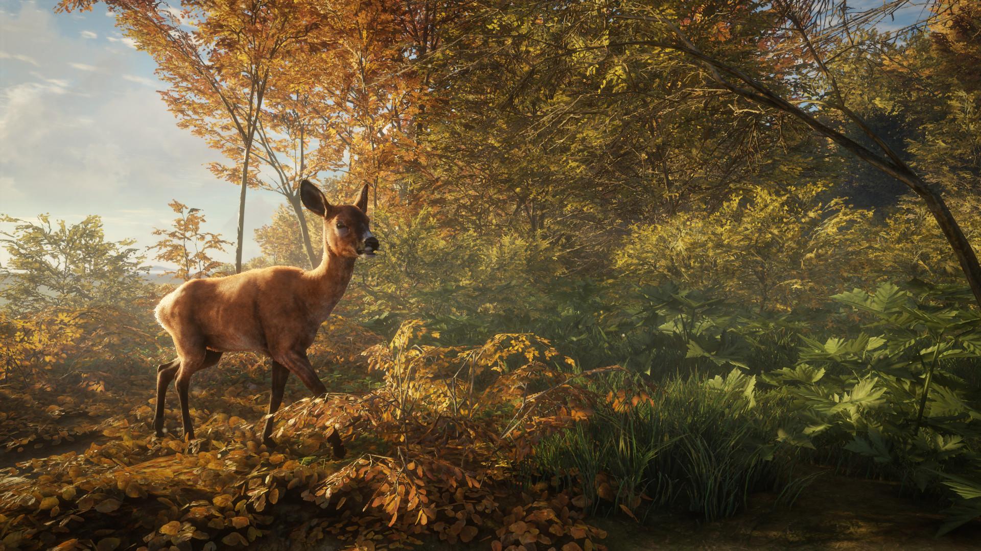 Yarrid henrard roe deer female