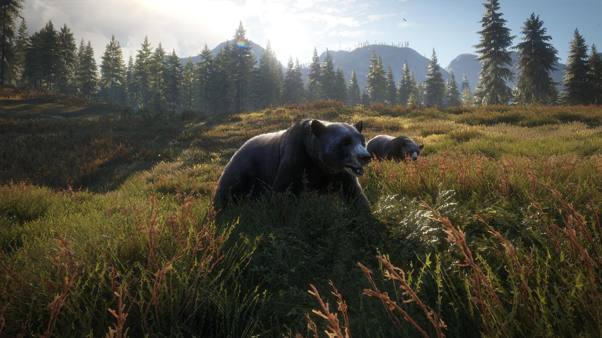 Yarrid henrard black bears