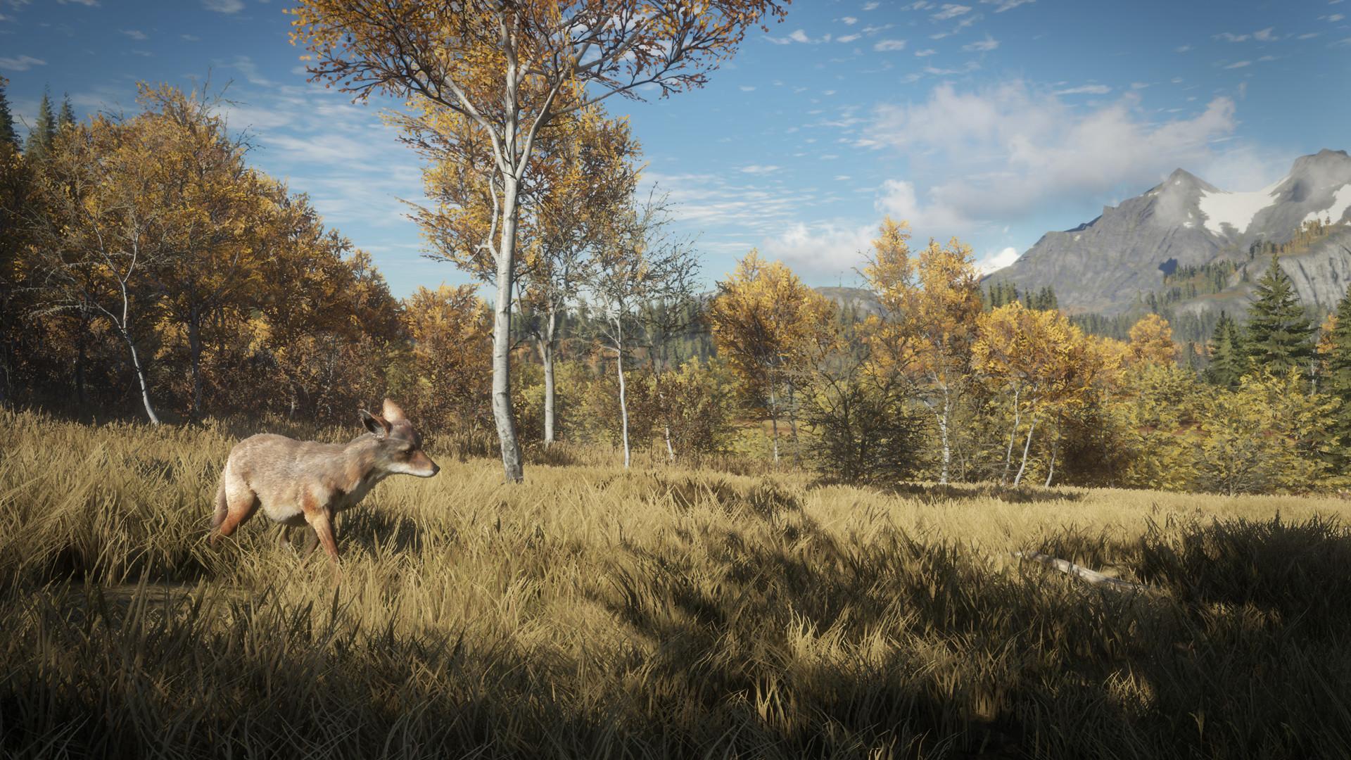 Yarrid henrard coyote field