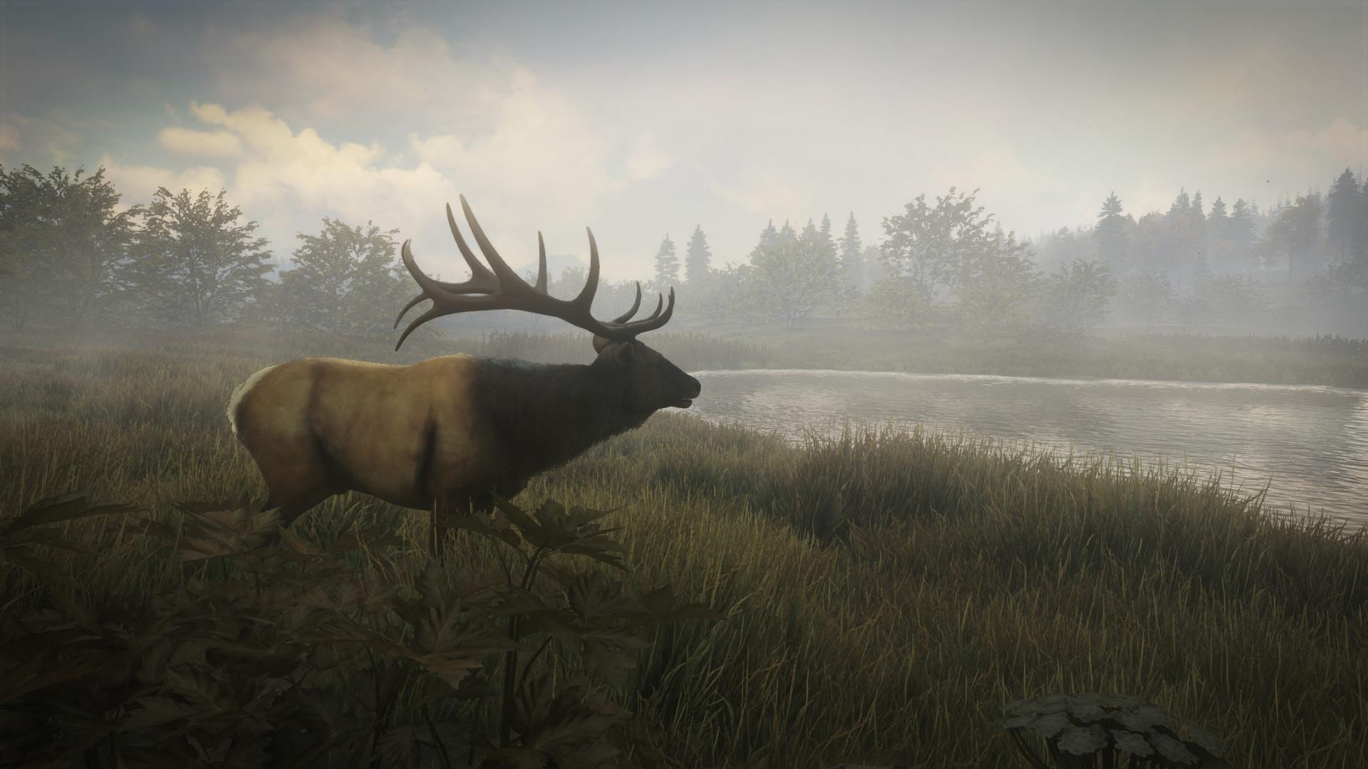 Yarrid henrard roosevelt elk morning mist