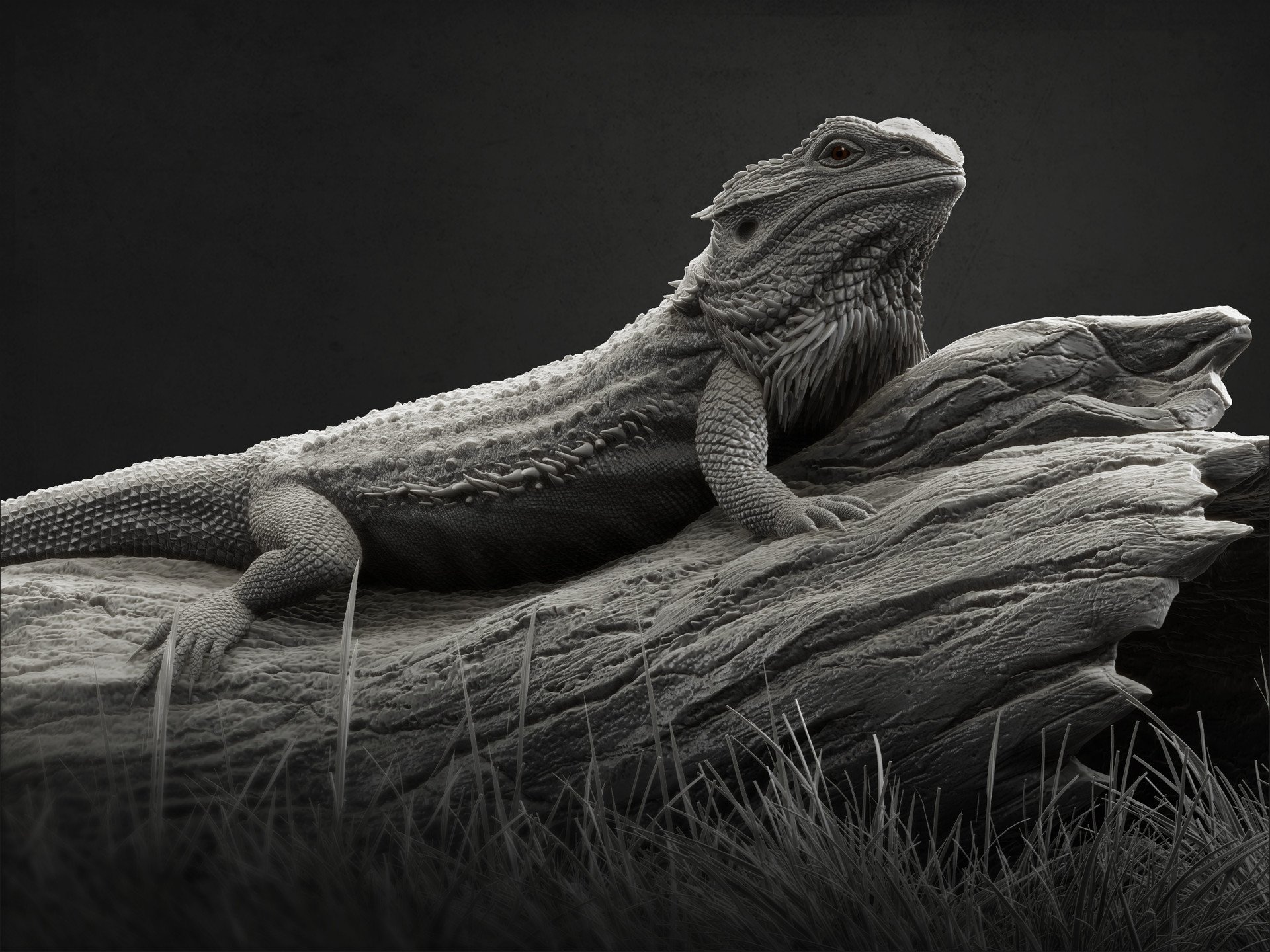 bearded lizard dragon - HD1920×1440
