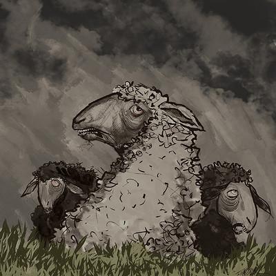 Todd kale sheep01