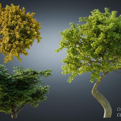 Oren leventar tree01