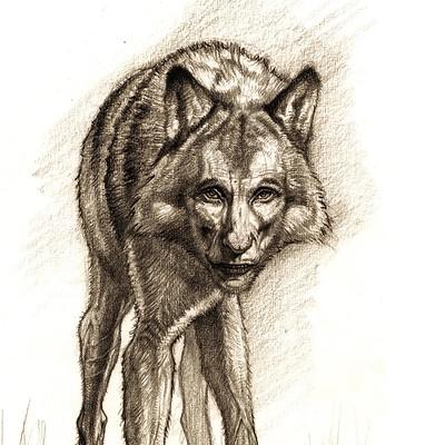 Constantine sekeris big fish wolf design01a