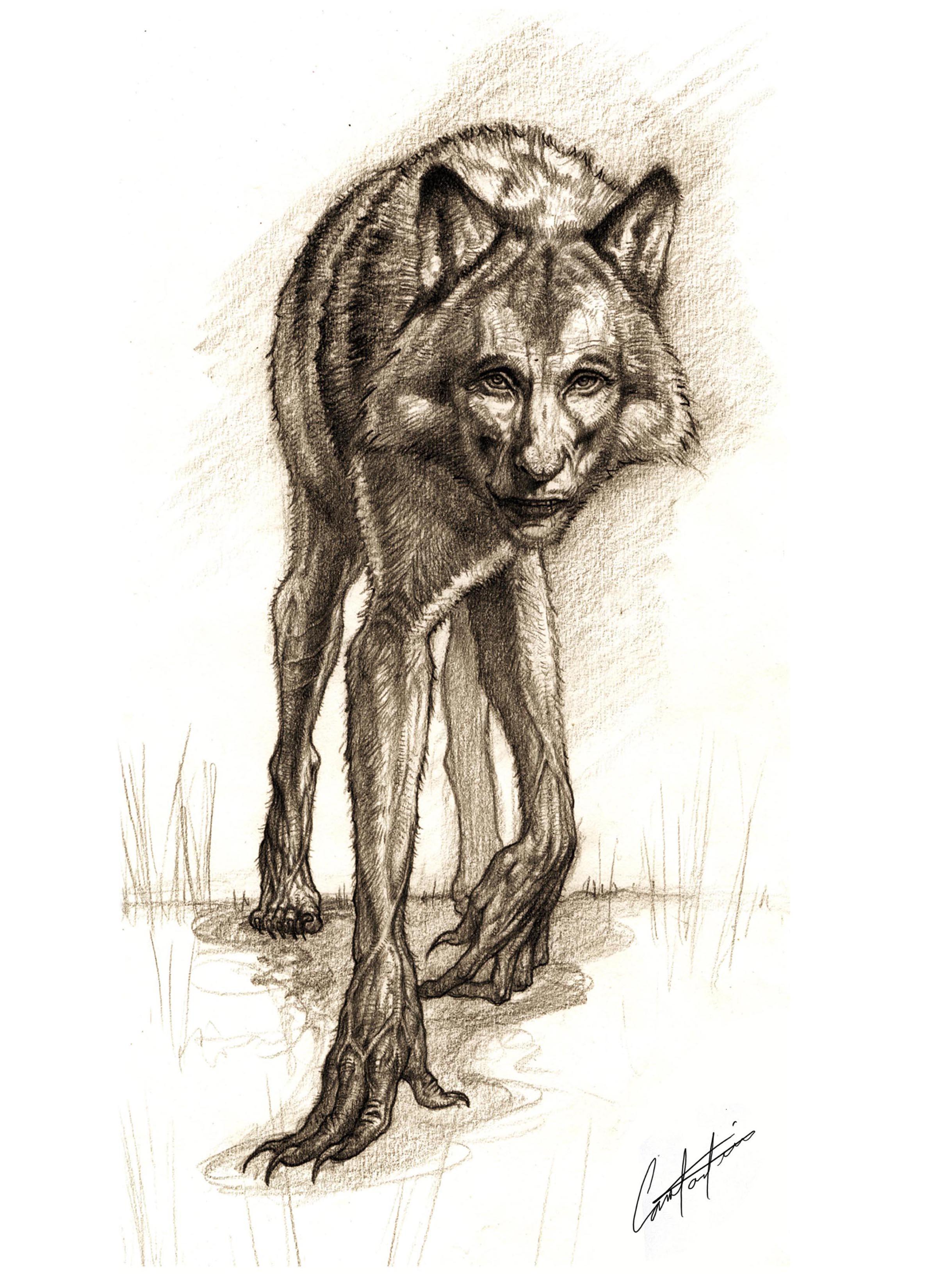 werwolf creature design sketch