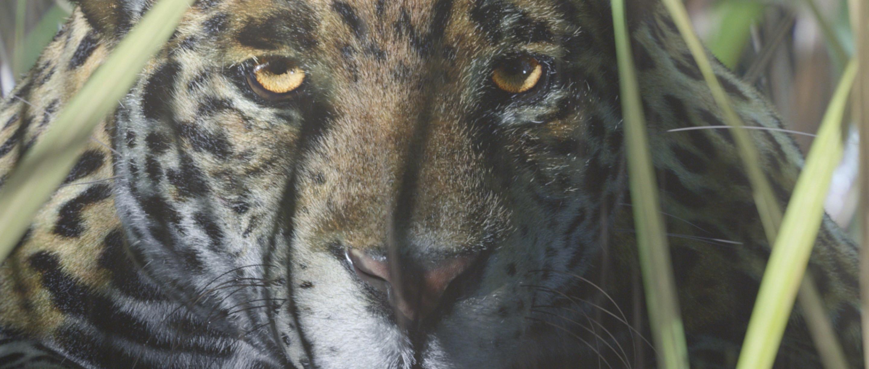A still from a shot featuring the CG Jaguar