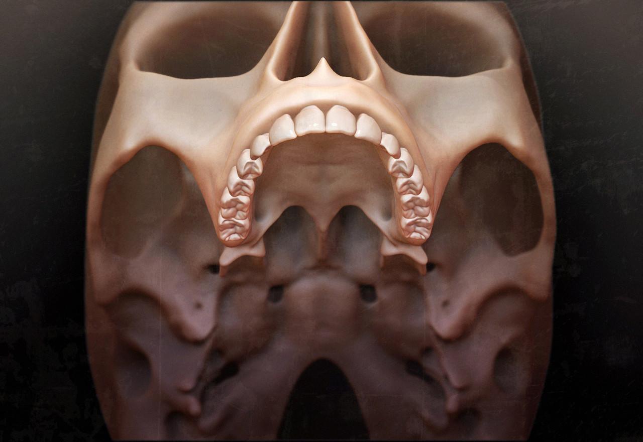 Dave wolf skull progress 02