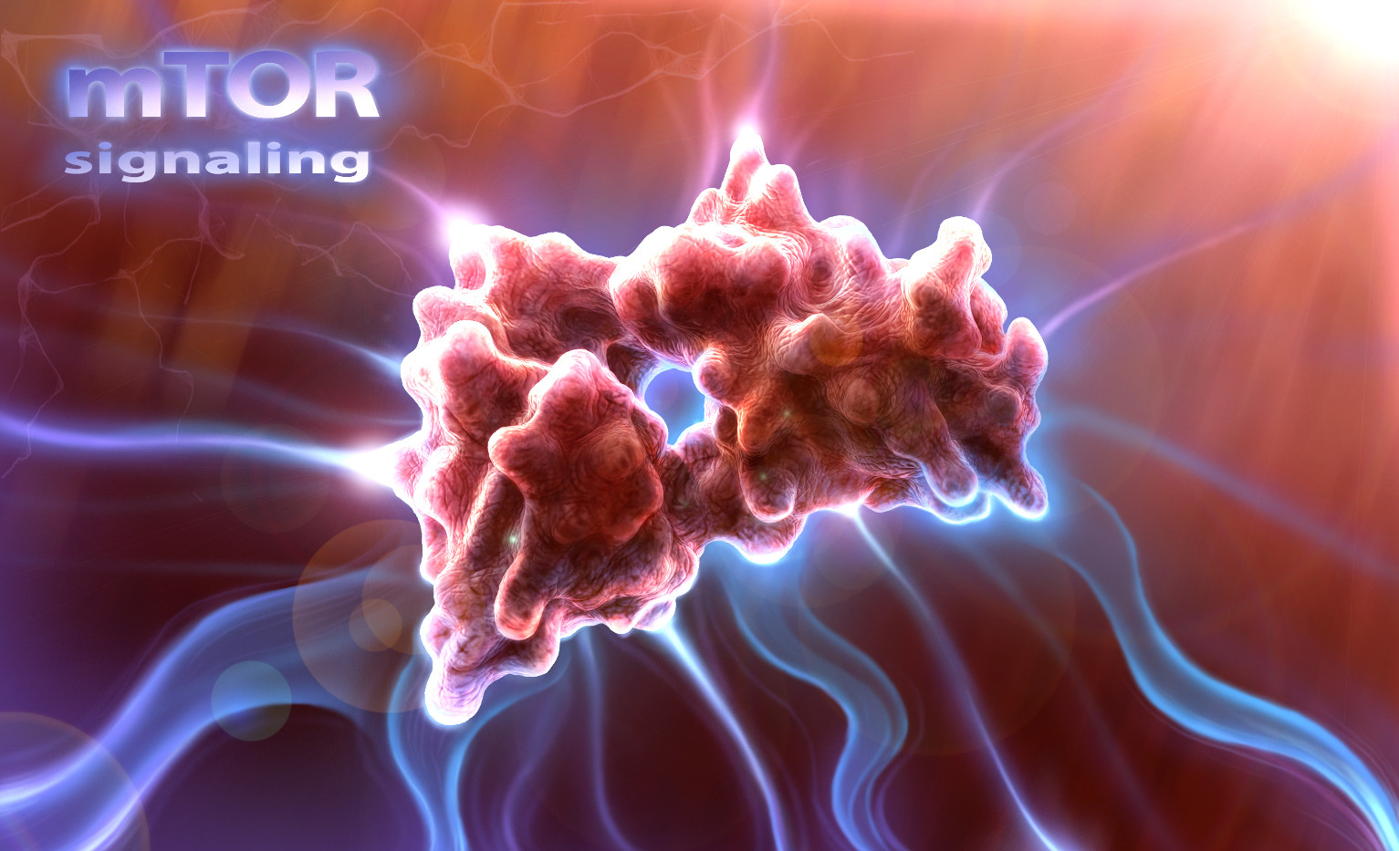 mTor signaling visual effect concept