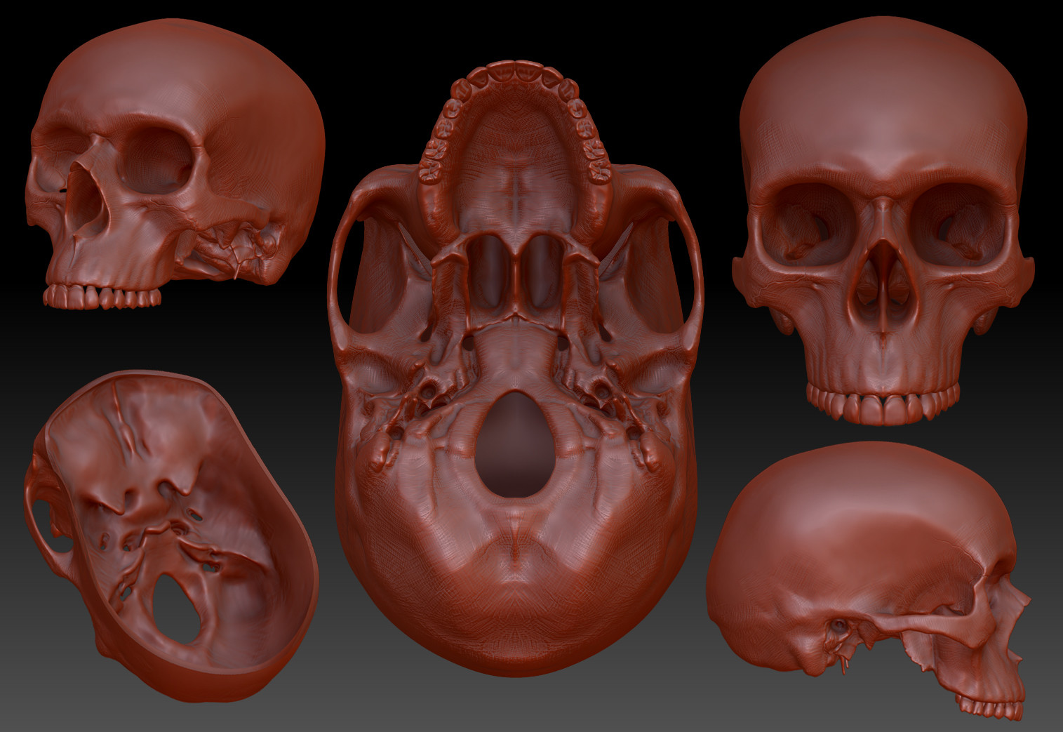 Dave wolf skull wip dw 001