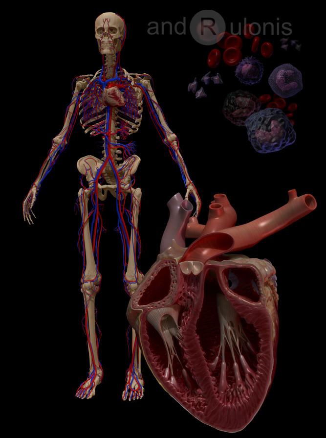 Dariusz andrulonis circulatory