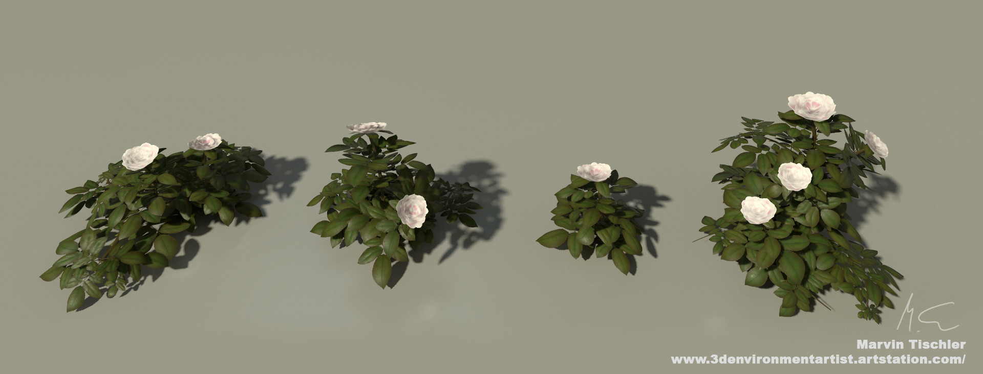 Marvin tischler plants 001 f