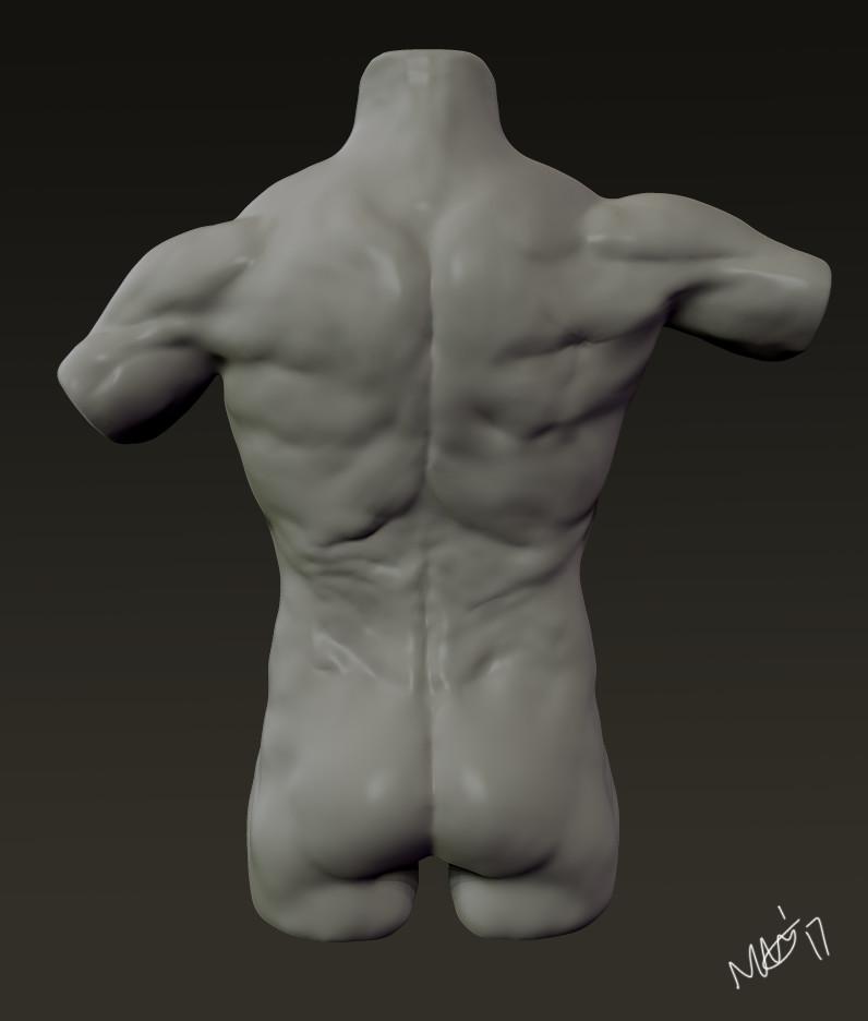 Nicola Griffiths - Male Torso Anatomy Study