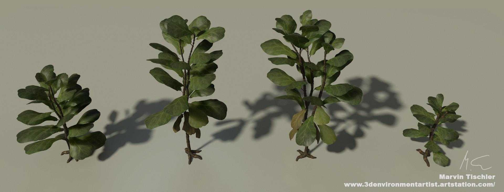 Marvin tischler plants 001 c