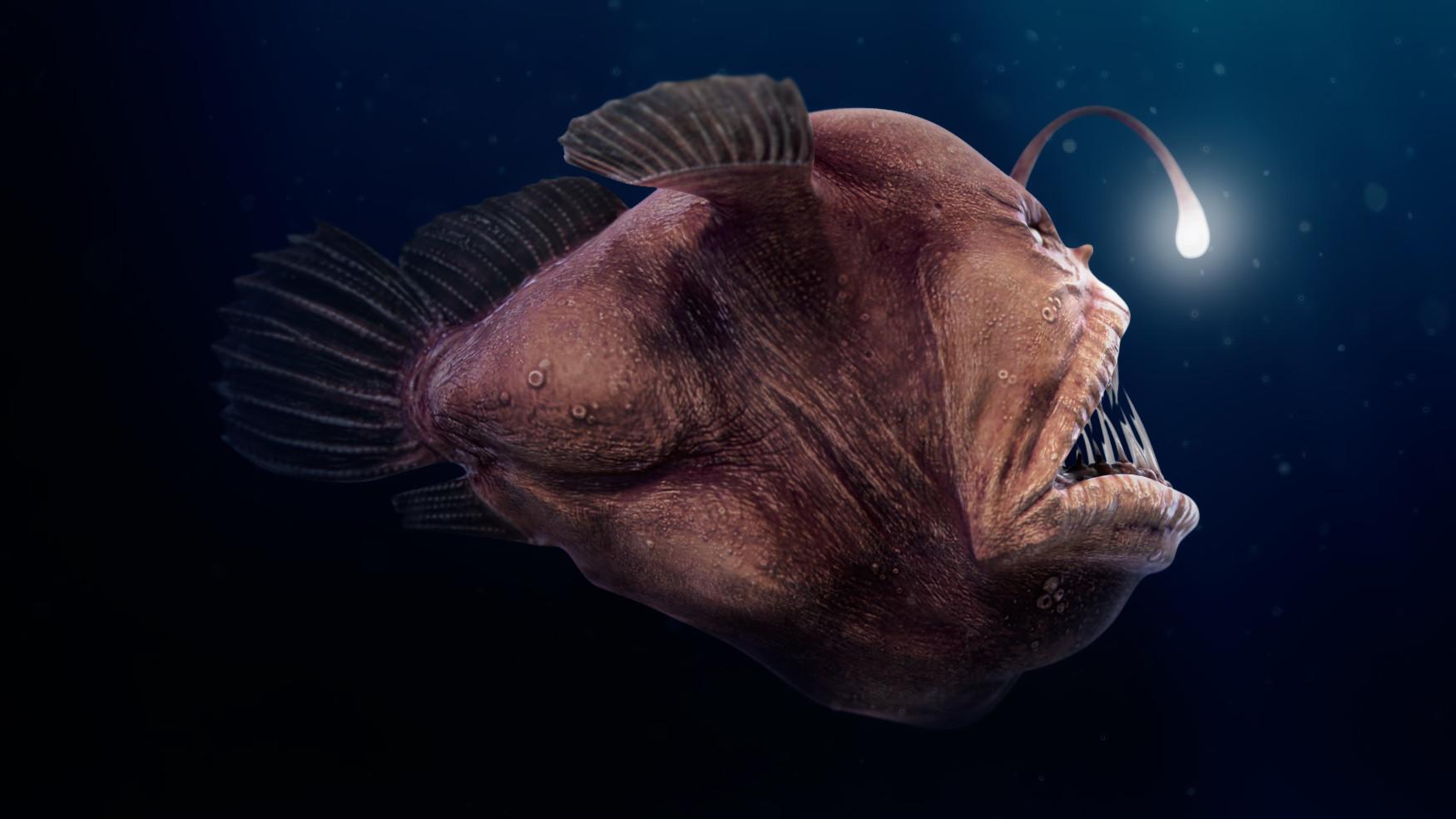 fish4u társkeresőfindlay társkereső