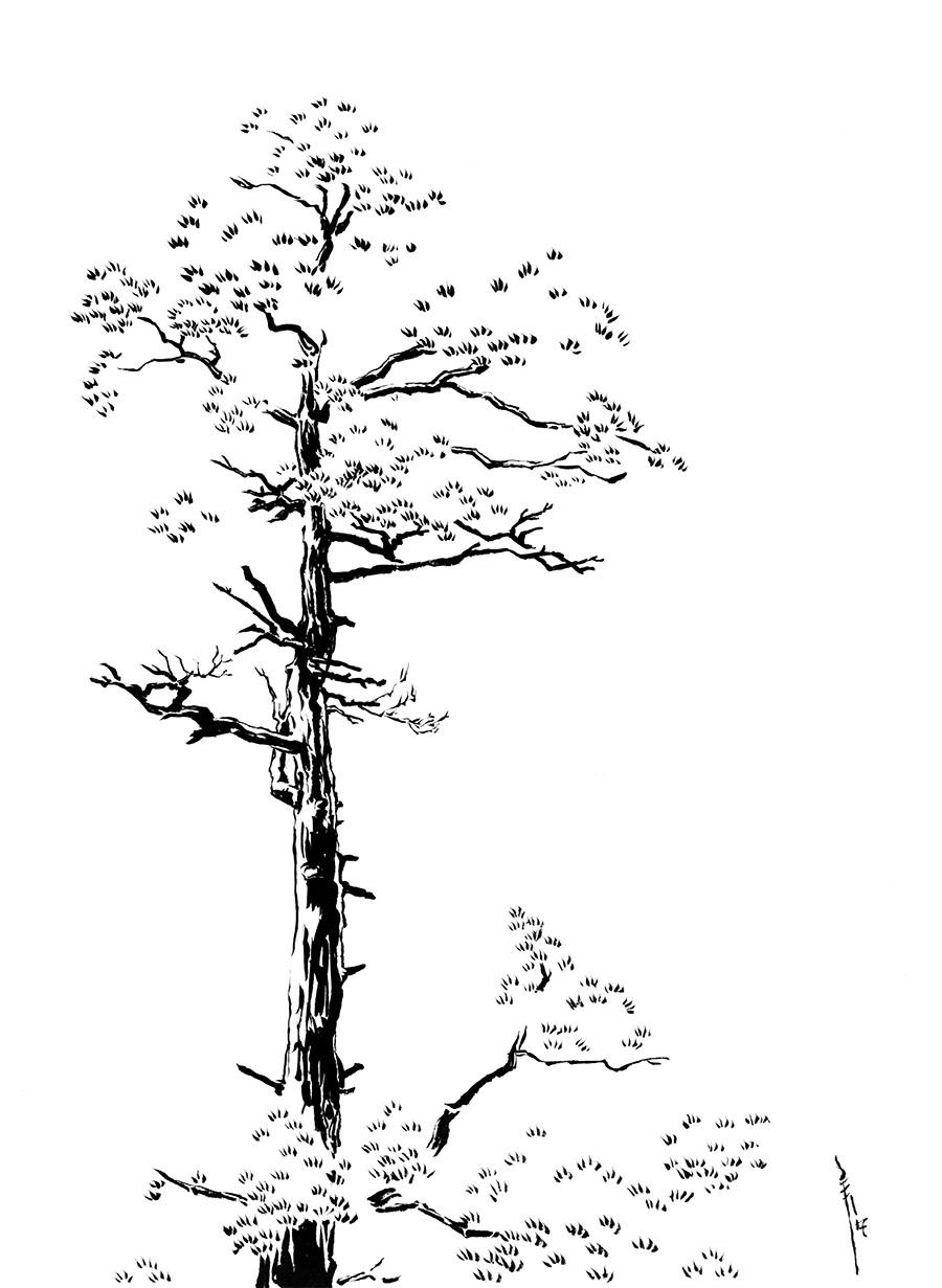 Rachel eady treesm