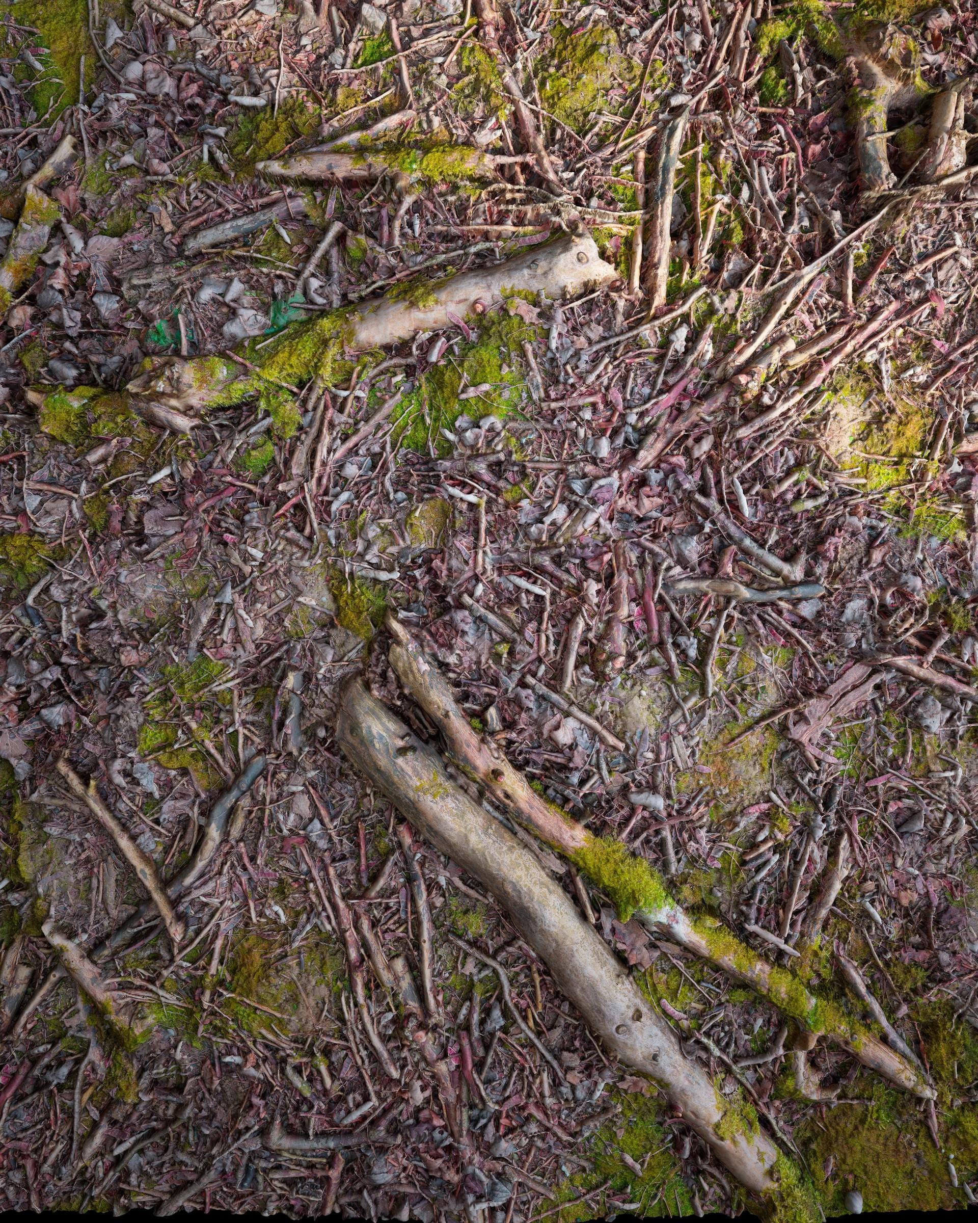 Tolga aksu displacement forest