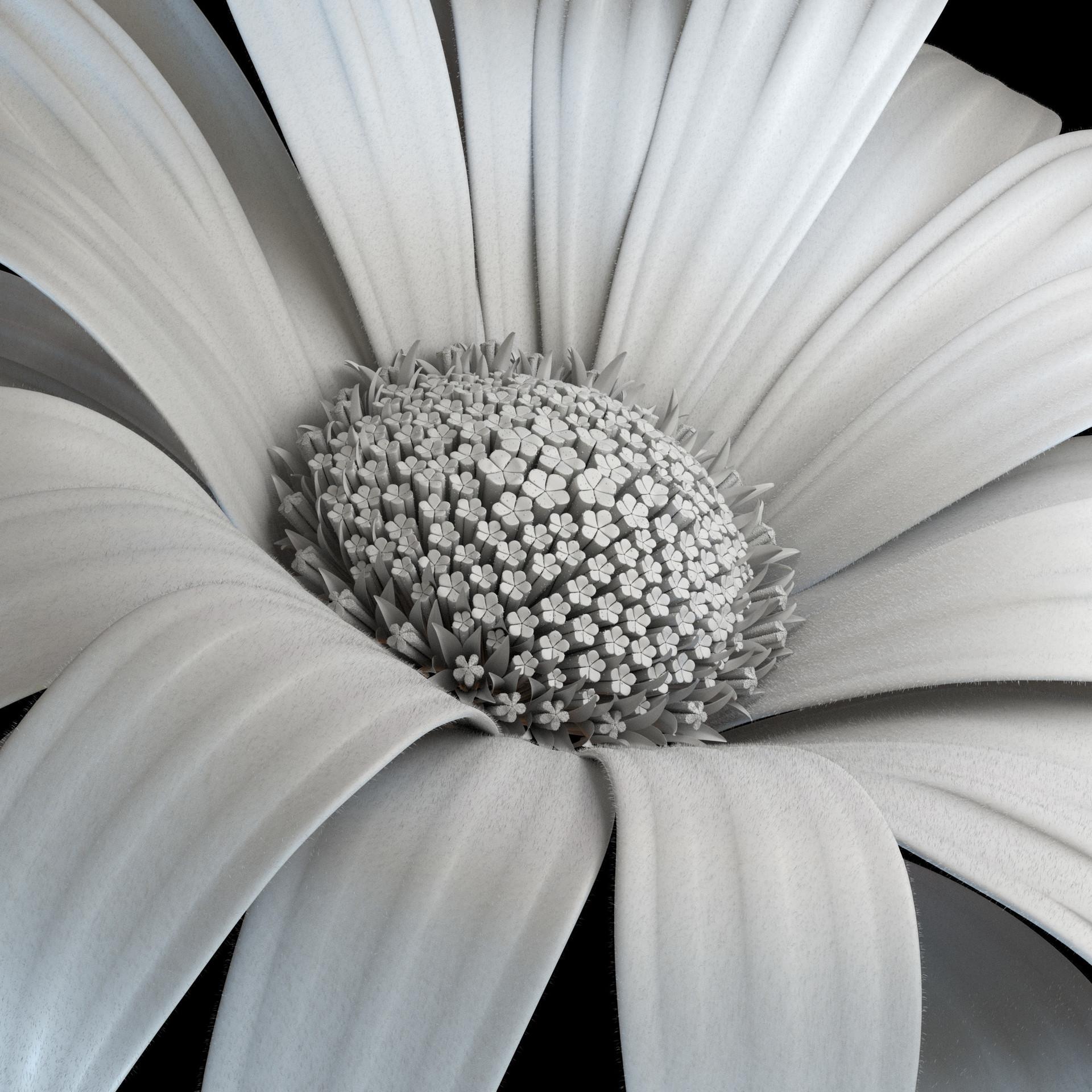Tharso arrue flor clay