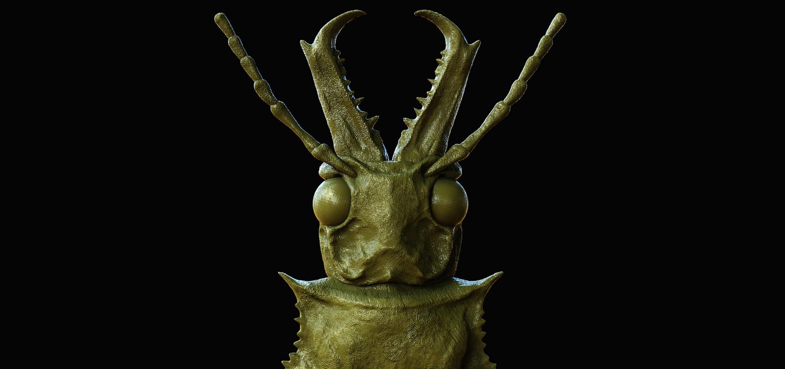 Longhorn Beetle Macrodontia Cerviconis