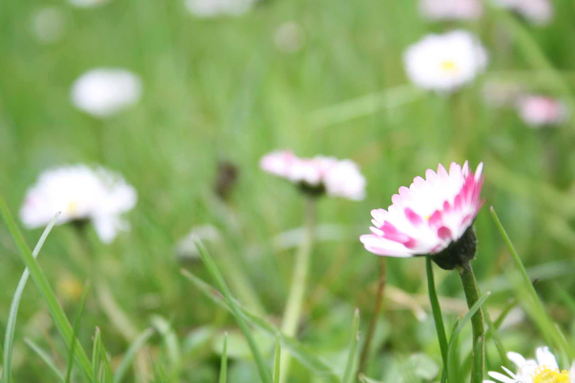 Laureen francois printemps