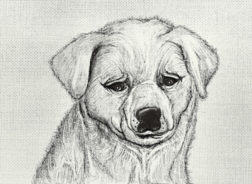 Suvamita dey doggy pencil shading