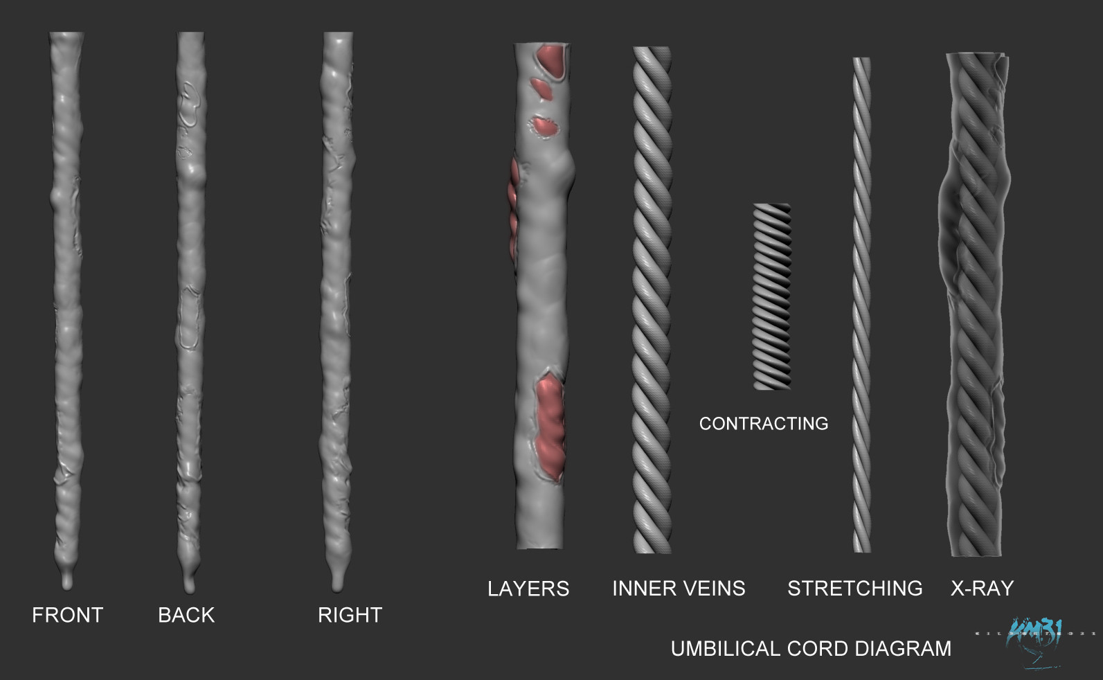 Raul eduardo sanchez osorio raul eduardo sanchez osorio km31 2 umbilical cord diagram 001