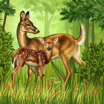 Martina nachazelova white tailed deer with fawn