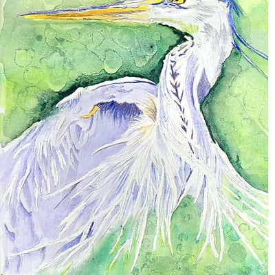 K fairbanks heron by fairbanks