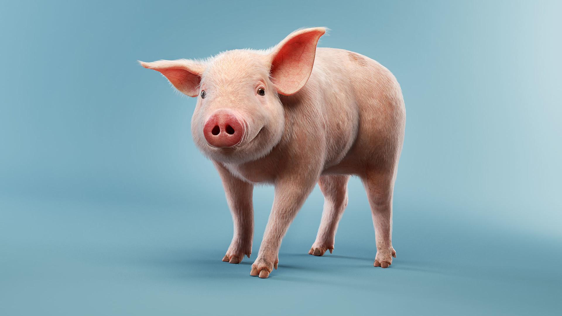 Luis ramos porco1