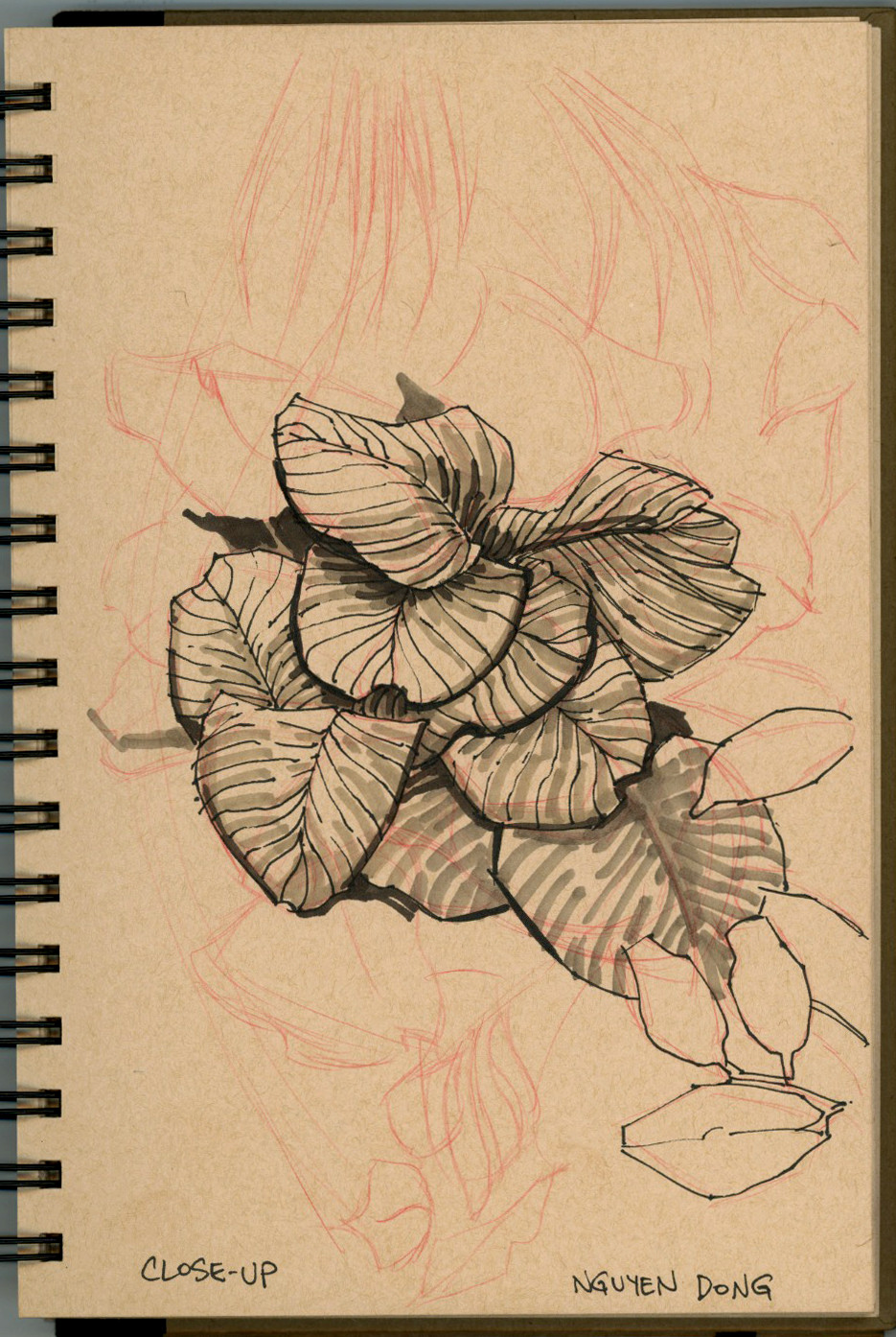 Huntington Botanical Gardens - Chinese Garden field sketch