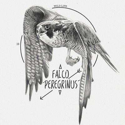 Miguel sastre falcon