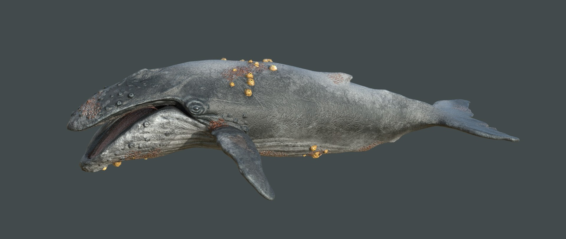 Laurie annis humpbackwhale haunting render24