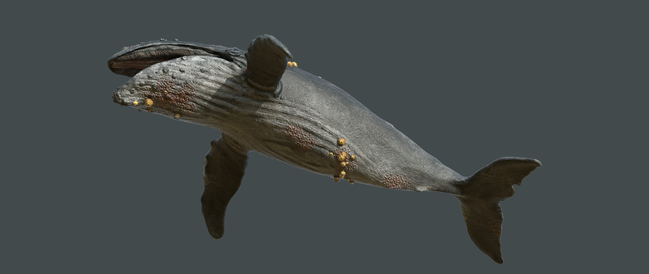 Game Character: Humpback Whale