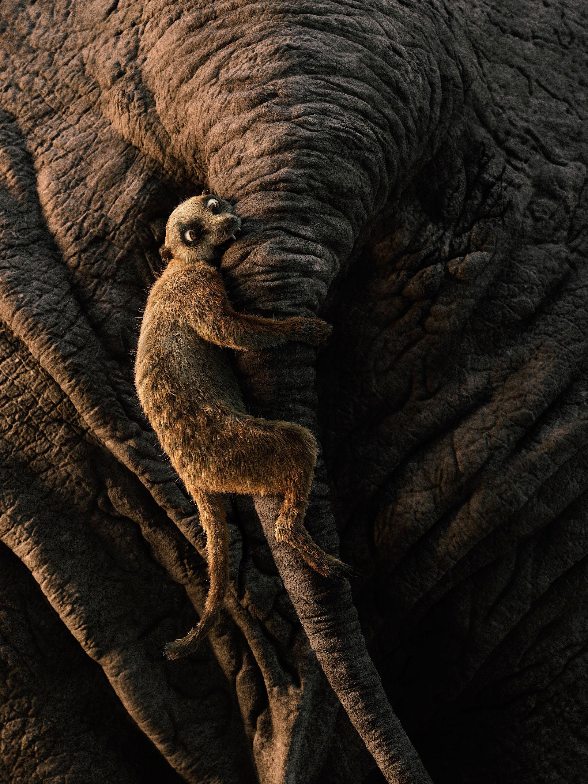 Luis ramos suricato final