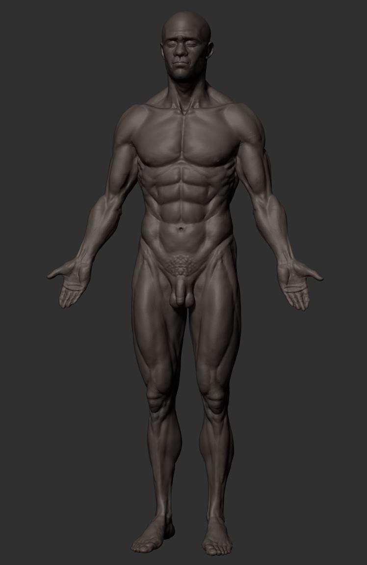 Luis Yrisarry Labadía - Symmetrical anatomy study