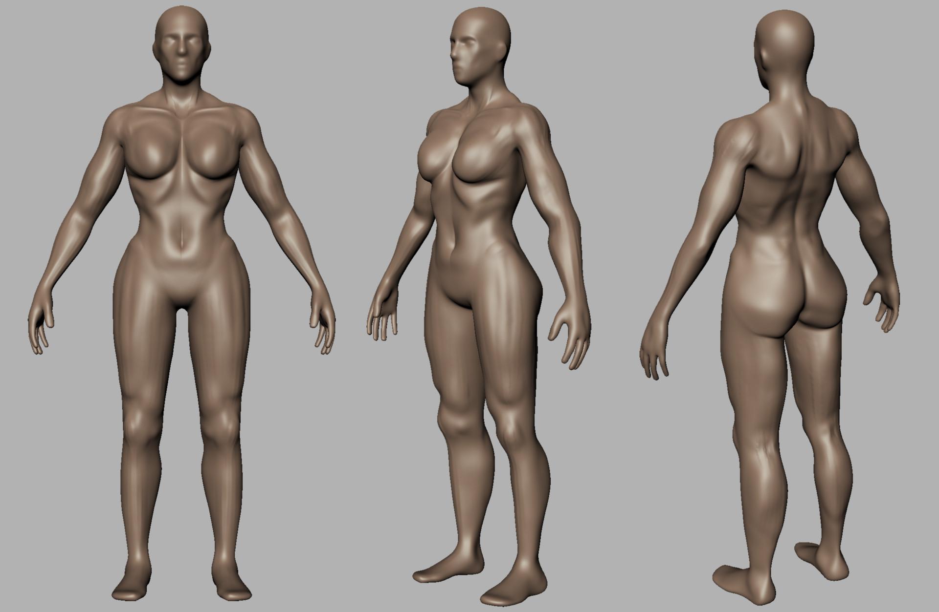 Tom Haines 3d Female Anatomy