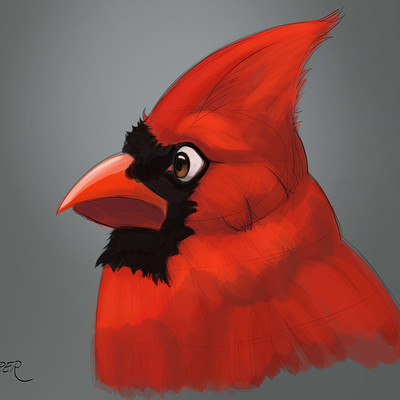 Nicholas jasper cardinal character designs