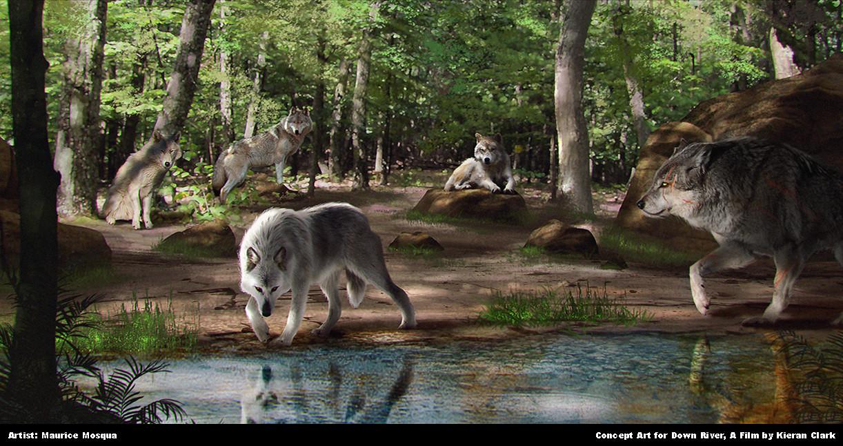 Wolves at Riverbank