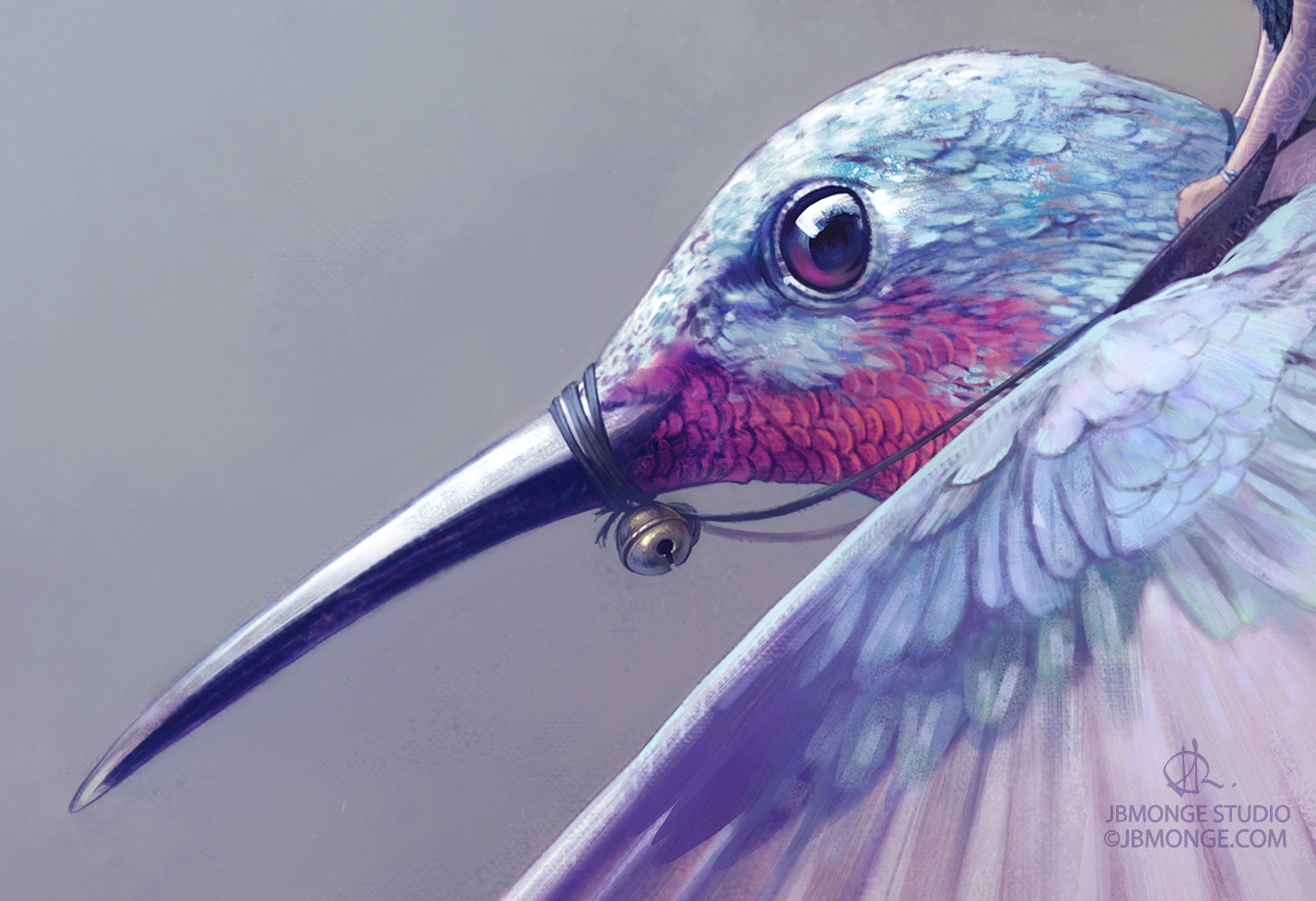 Close-up on the face of the hummingbird