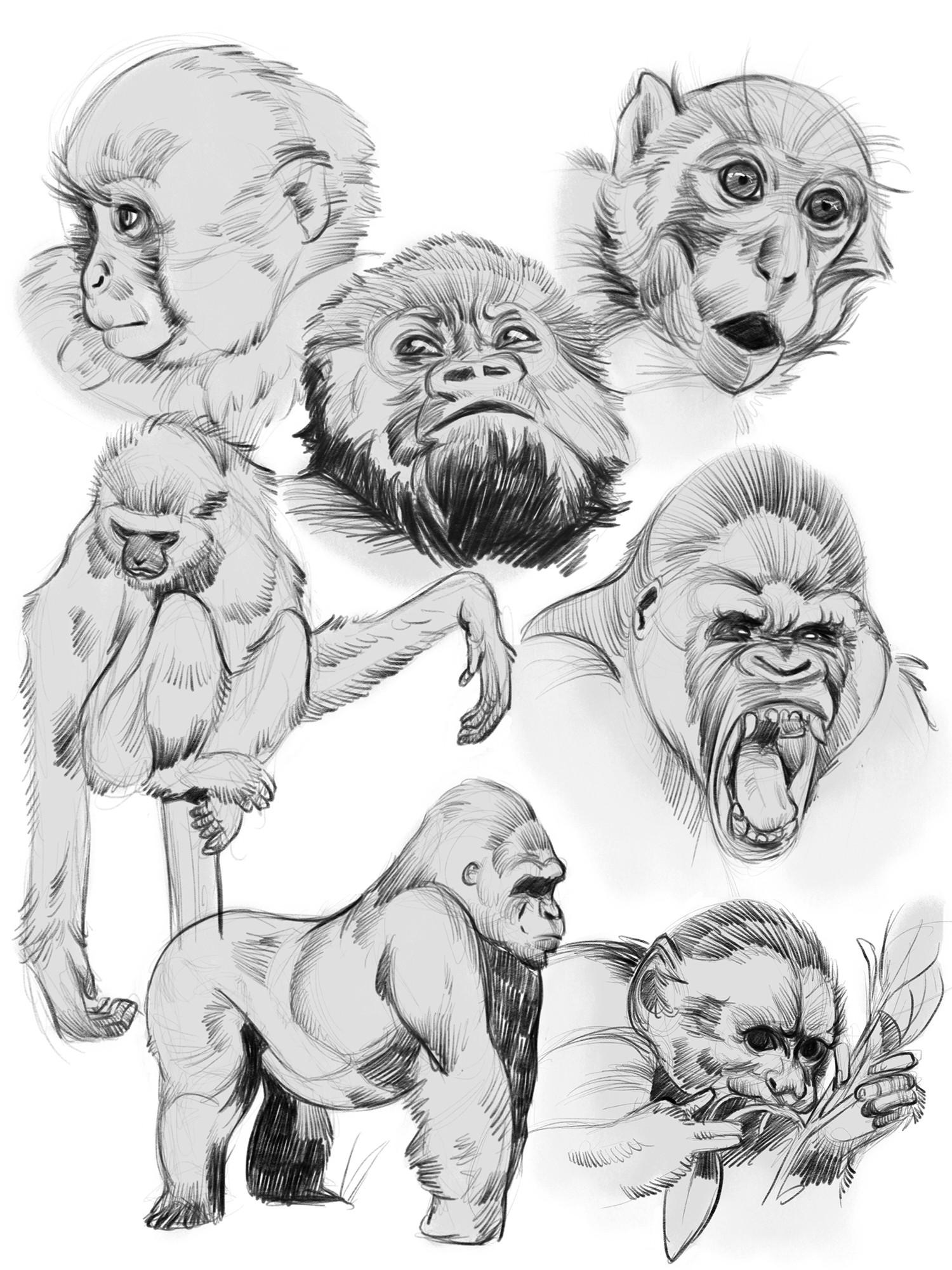 Monica ion monkeys