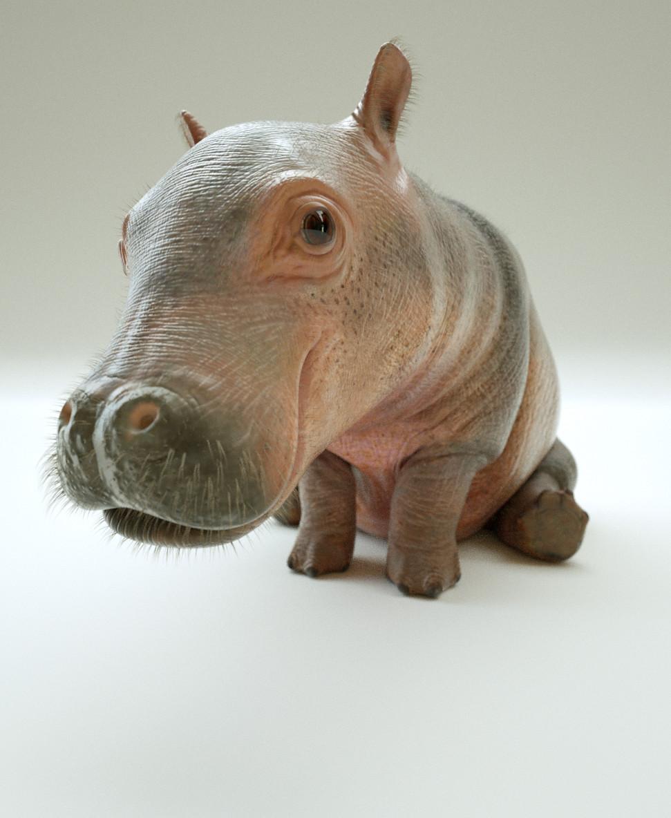Paul massey hippo a 08