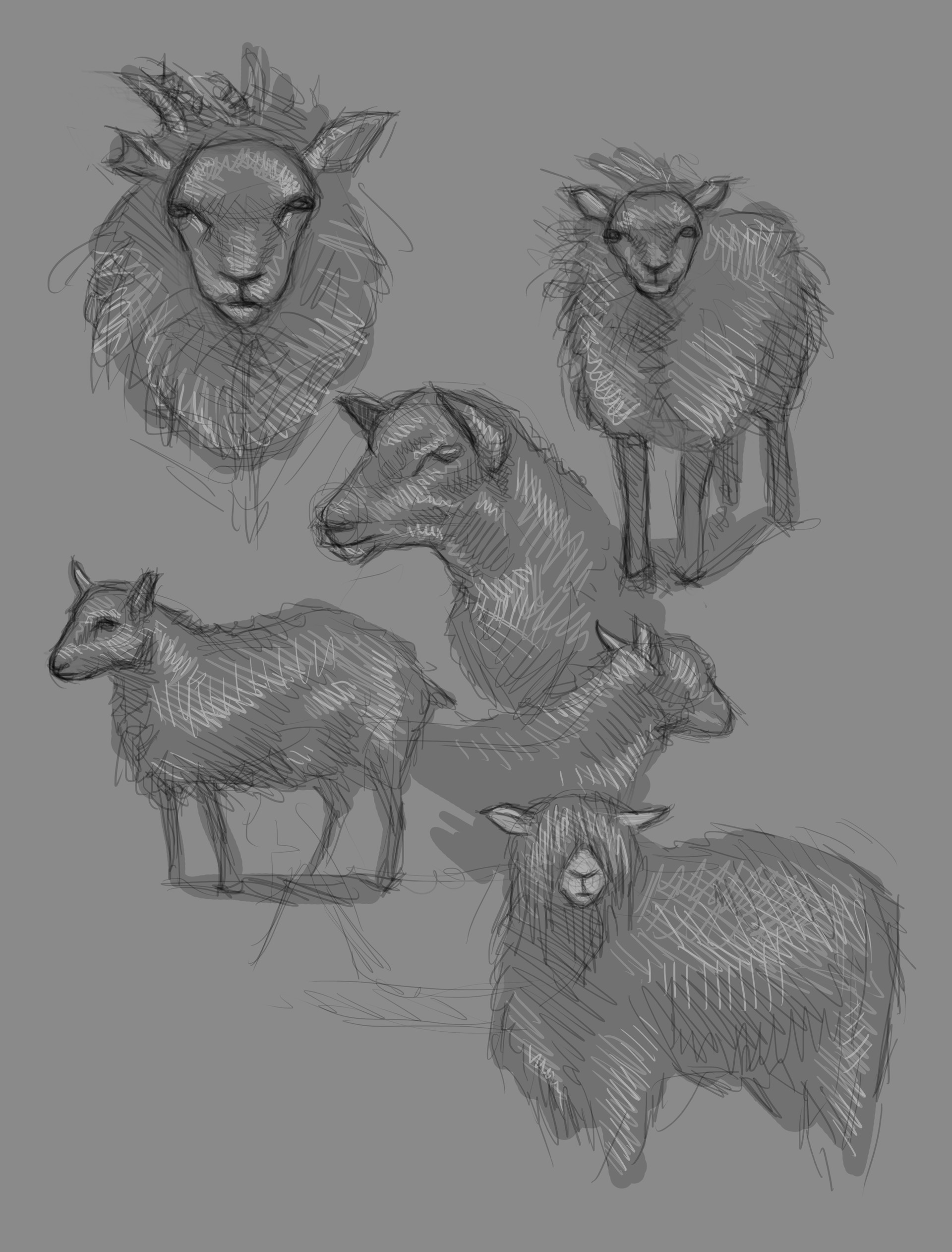 Teodora dimova sheepstudies