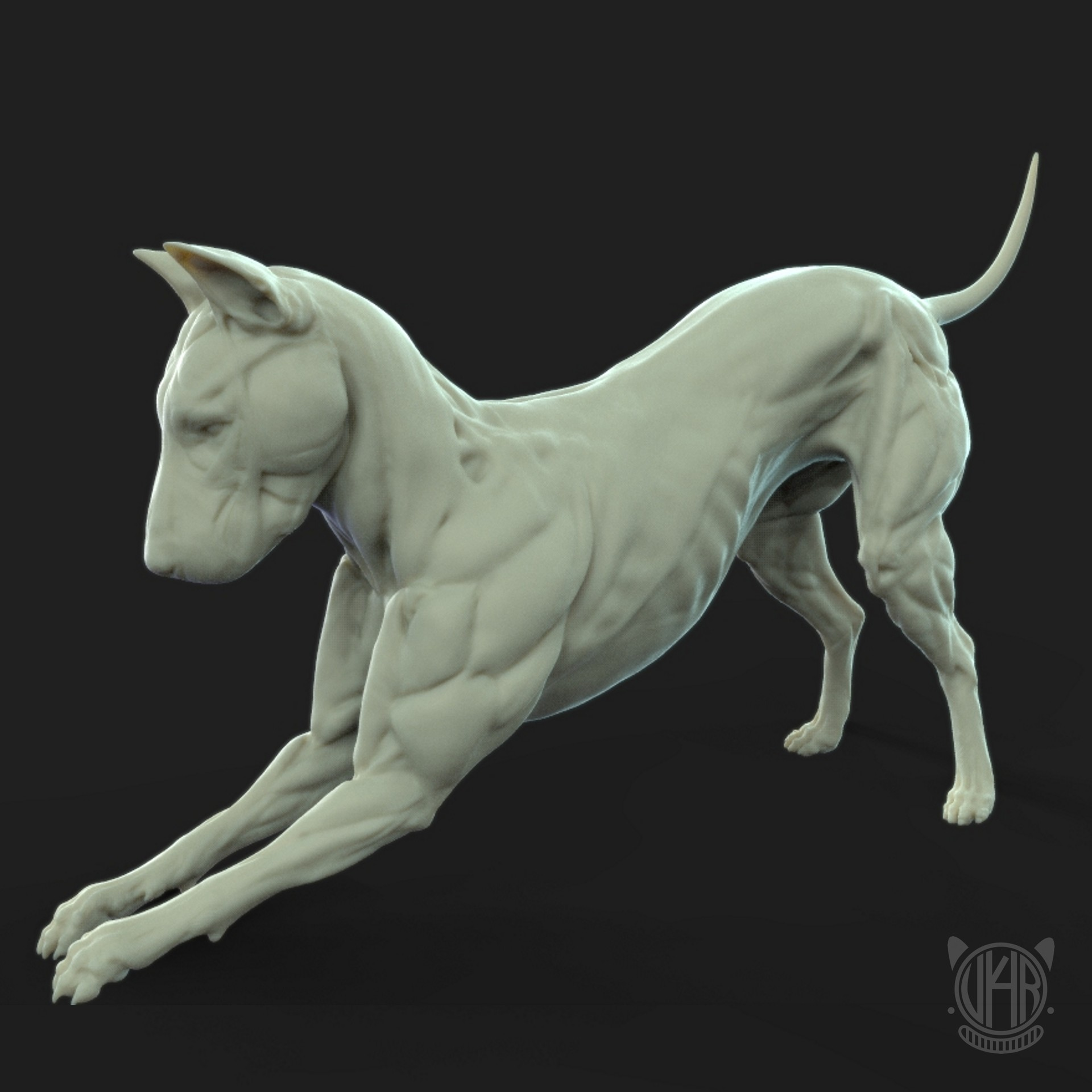 ArtStation - Dog Anatomy Exercise, Yi Hua Real
