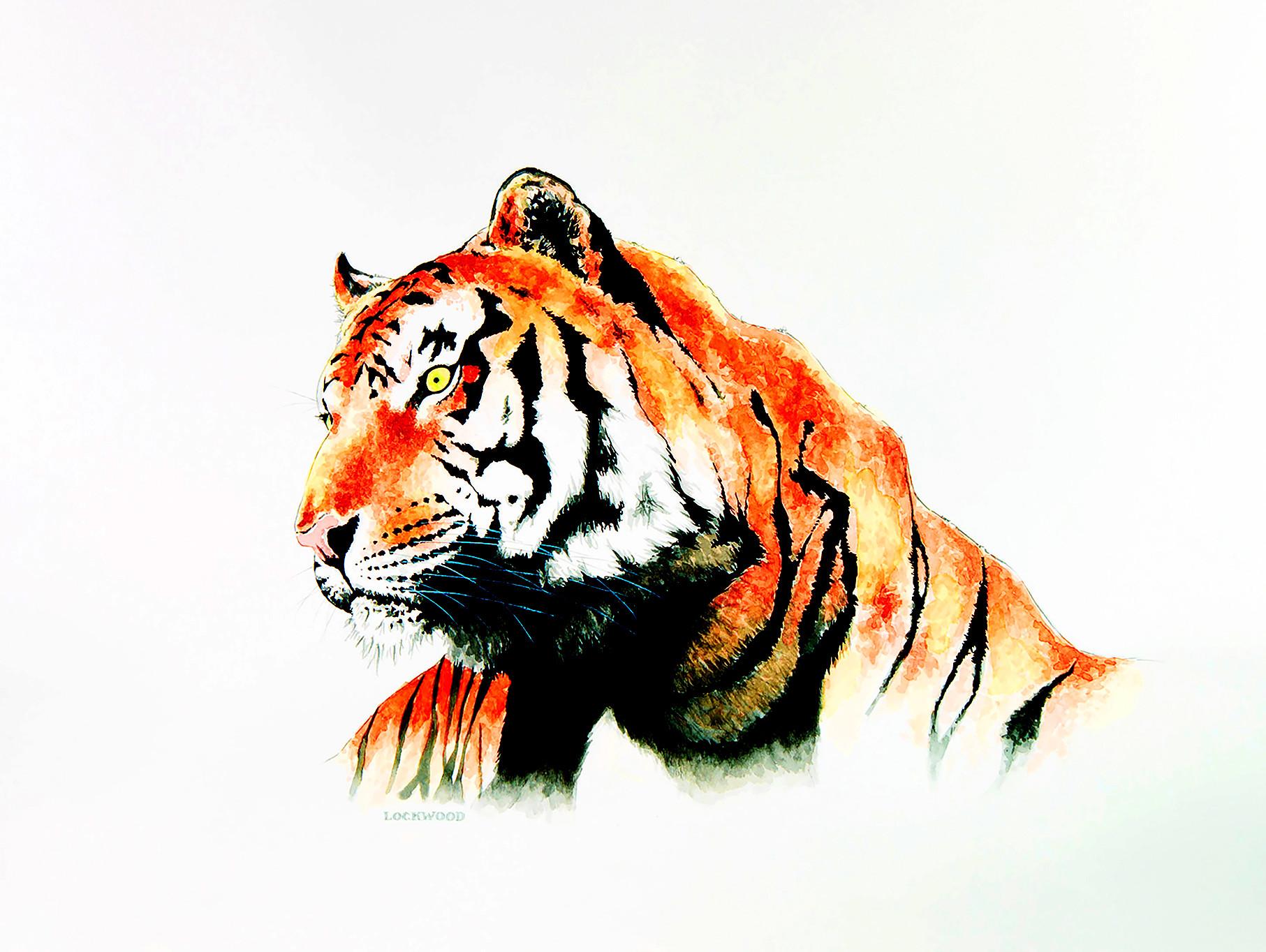 "Tiger 2 20x30"""