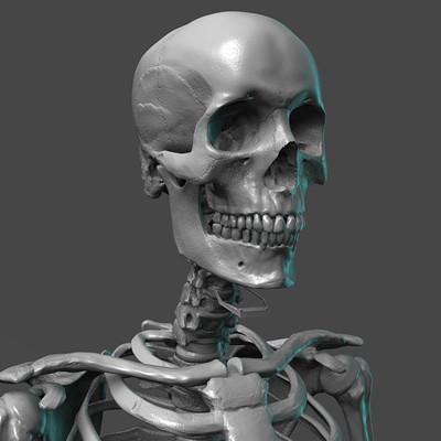 Madeleine spencer skeleton 7