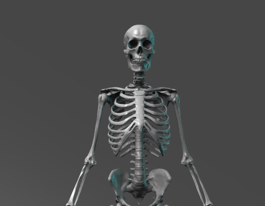 Human skeletal reference. Sculpted from an actual human skeleton while studying in cadaver Lab at the University of Utah medical school.