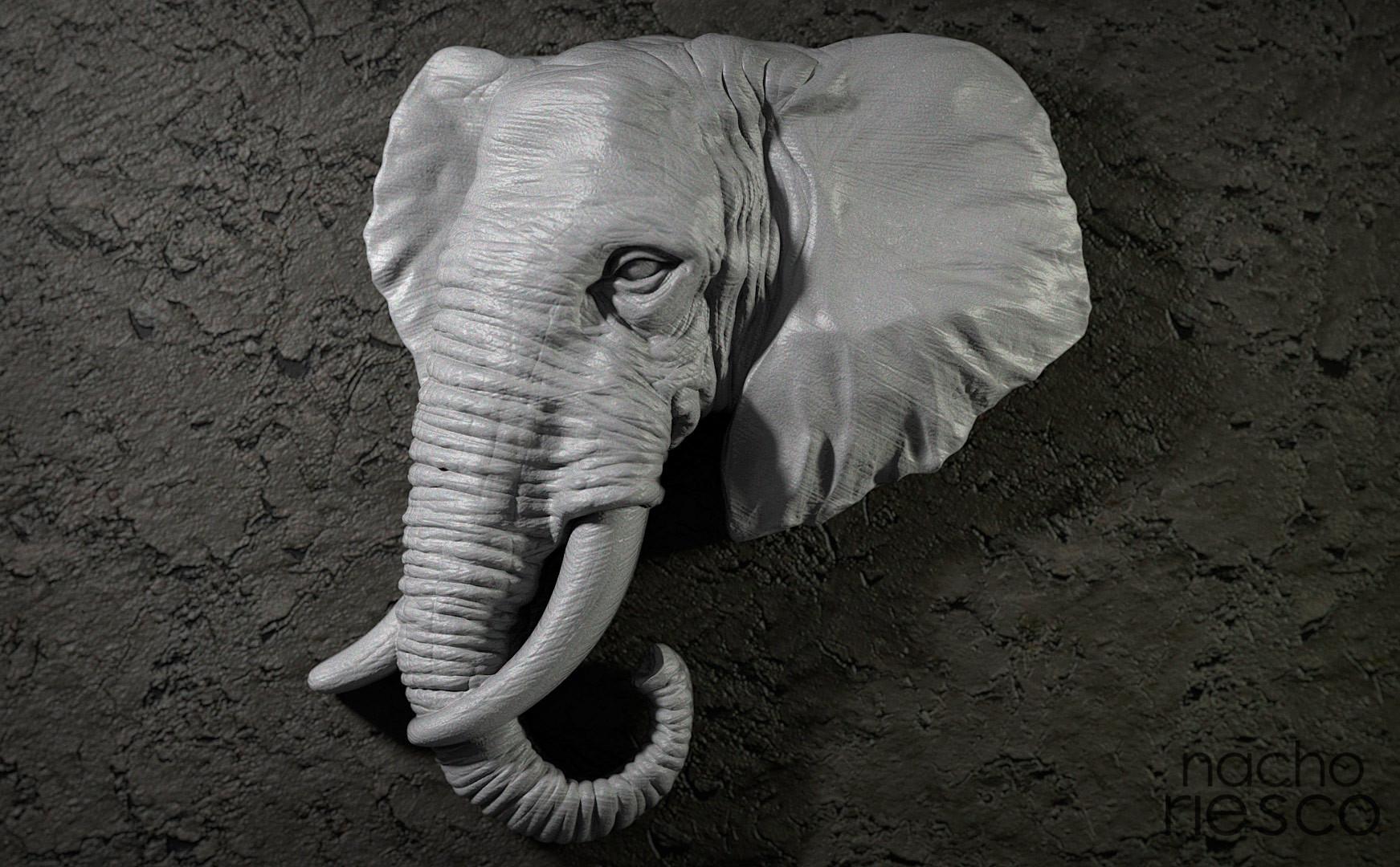 Nacho riesco gostanza elefante 500k