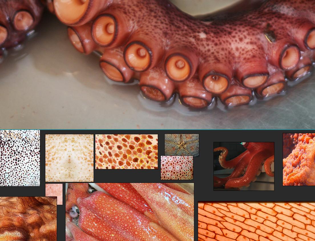 mood board octopus texture